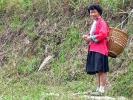 Frauen der Yao-Minderheit (Langhaar Stamm), terrassierten die Longsheng Reisfelder.
