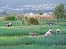 Kleinbauern bewirtschaften ihre Felder