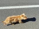 Lampo hat mich für fünf Kilometer begleitet … (-: