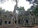 Die eingewachsenen Bäume verleiten dem Tempel ein ganz besondere Atmosphäre