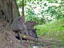 Im umliegenden Wald sind einige Affen unterwegs