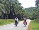 Teilweise fahren wir kilometerweit an Palmenhainen entlang