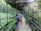 Zu Besuch bei unseren nahen Verwandten - Orang Utan Park