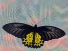 Zu Besuch in der Schmetterlingsfarm