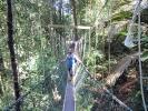 Wackelige Angelegenheit - Hängebrücke im Nationalpark auf Penang