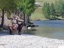 Das Pferd überlegt wahrscheinlich ob es durch den Fluss kommt