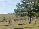 Im Terenji Nationalpark (60 nördlich von Ulan Bator)