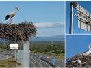 Der Storch hat auch eine gute Verkehrsanbindung.
