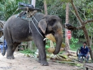 eine Elefantenschule war auch dabei